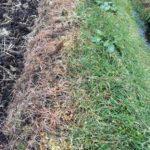太陽光発電設備のメンテナンス上手な除草剤の散布