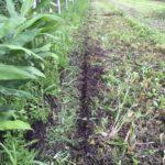 営農型発電の農地転用許可の更新(ソーラーシェアリング更新)