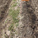 除草剤の散布は秋がお勧め!全面散布は注意が必要です。