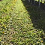2017太陽光発電所の草刈第1回目