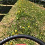 2017太陽光発電所の草刈第2回目